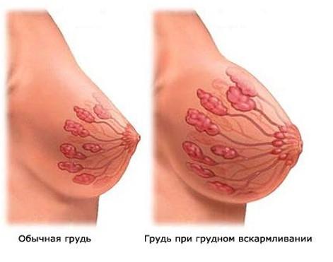 soski-stali-bolshe-na-grudi